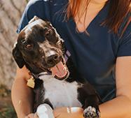 Canine Vaccine Protocols Services